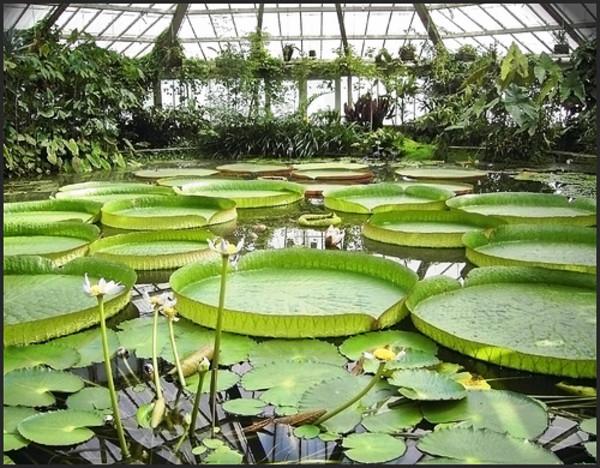 09 diciembre 2011 la atalaya de luarca for Jardin botanico nacional