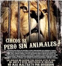 circosin animales